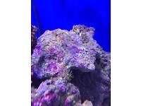 Marine fish, coral and inverts