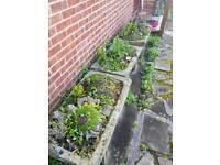 Stone trough planter