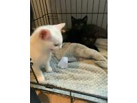 Beautiful kittens looking for forever homes
