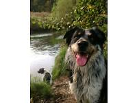 Dog Walker looking for Spare Room in Wilmslow