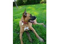 Needs a active family and a loving home.