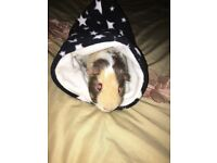 guineea pig boy 2 years