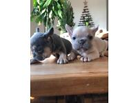 Puppies In Milton Keynes Buckinghamshire Dogs Puppies For Sale