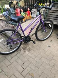 Ladies bicycle Avalon