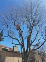 Tree removal service,book now and get 15% for spring season