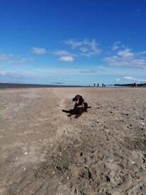 Passionate dog Walker near Granton Beach