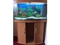 Jewel 180 litre fish tank