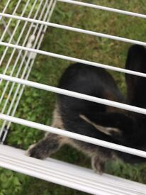 Baby rabbit and hutch
