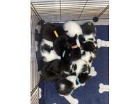 7 Kitties for sale
