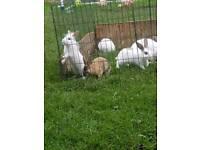 Baby rabbits free