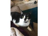 MISSING CAT IN BLOXWICH