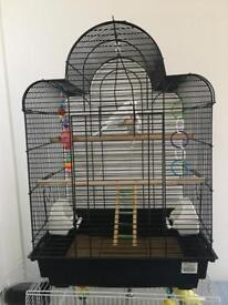 2 baby budgies and cage