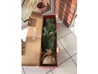 Small Christmas tree and lights. Used once