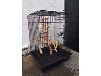 Large parrot / bird cage with accessories