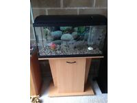 Ander 3 ft fish tank 80cm full set up with filter stand heater light gravel ornament all work in pic