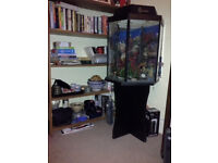 Fish tank in good order 60 litres - for collection only