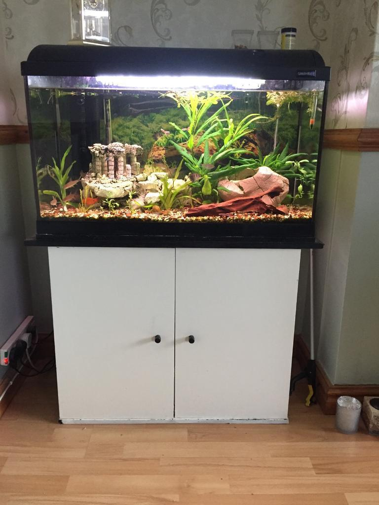 Fish tank | in Leyland, Lancashire | Gumtree