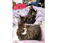 6 month old kittens all neutered 2 male & 2 female