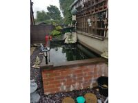 Fish pond and all accessories for sale