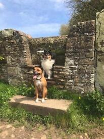 Friendly dog walking and training by Elspeth