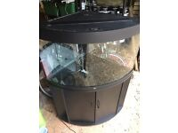 Juwel Trigon 190 corner aquarium fish tank plus stand