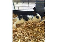 Rabbits for re homing