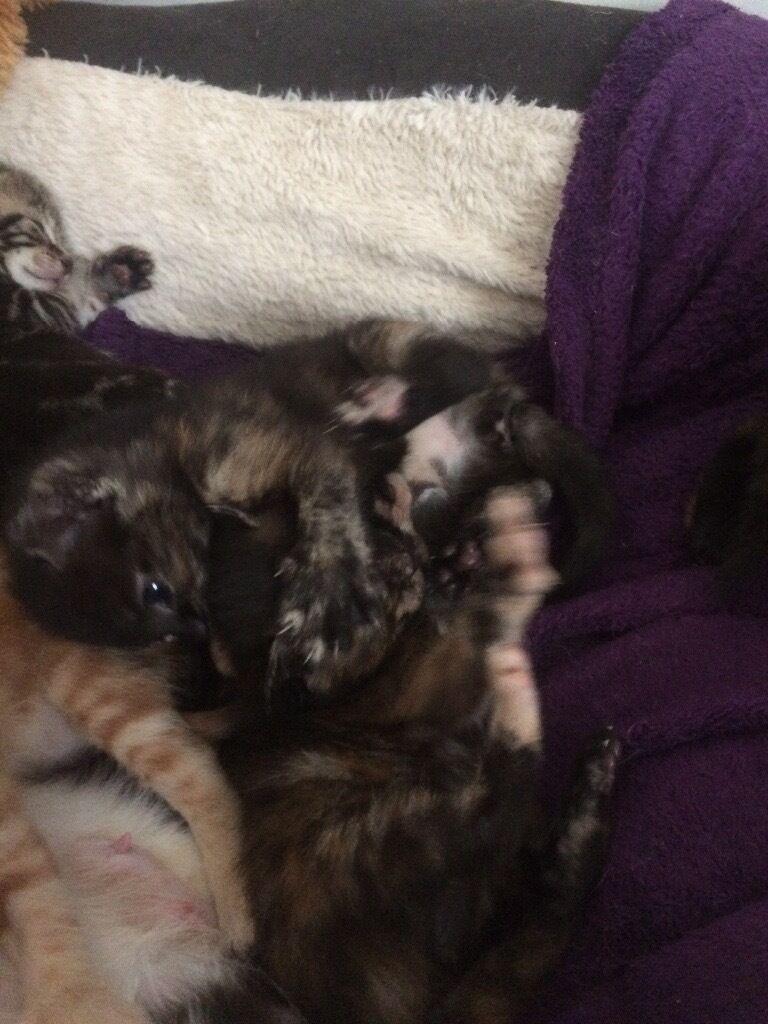 4 ZADORABLE KITTENS
