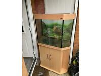 Amazon tank forsale with stand good condition