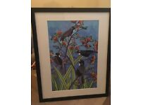 Framed kiwi bird picture - brand new