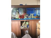 Fish tank full set up £200 no offers