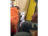 Dog walker in derby