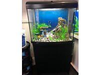 Aqua one start 600 marine tropical fish 𝐓𝐚𝐧𝐤 Aquariums