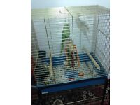 a parrot cage for urgent sale only £35