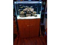 3ft x 2ft x 2ft tank with sump and all equipment