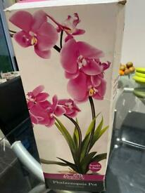Boxed orchid (artificial)