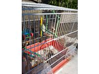 Budgerugar with Cage and Toys