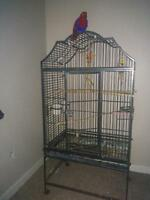 Eclectus bird (female) with cage