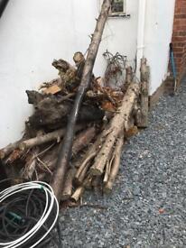 Tree logs (free)