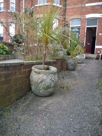 Vintage concrete garden tubs