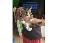2 kitten for free