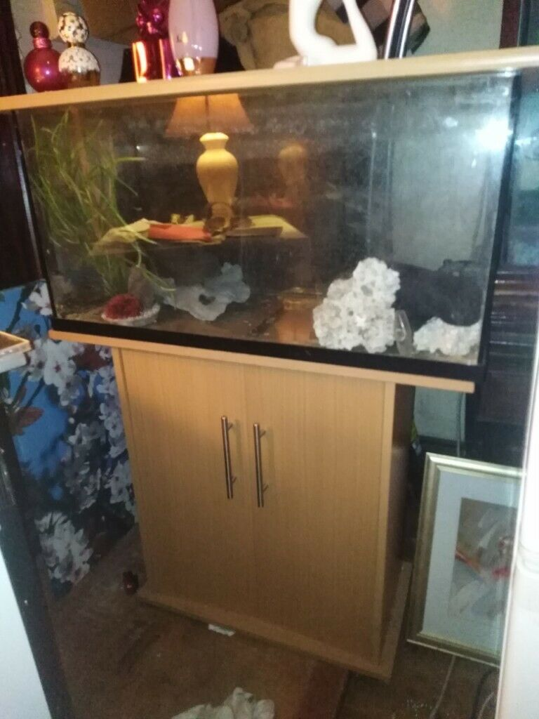 Aquarium Fish Tank With Wooden Stand Gravel And Ornaments 115cm Tall X 80cm Wide Clacton Co15 In Clacton On Sea Essex Gumtree