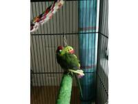 7month old kakariki and cage