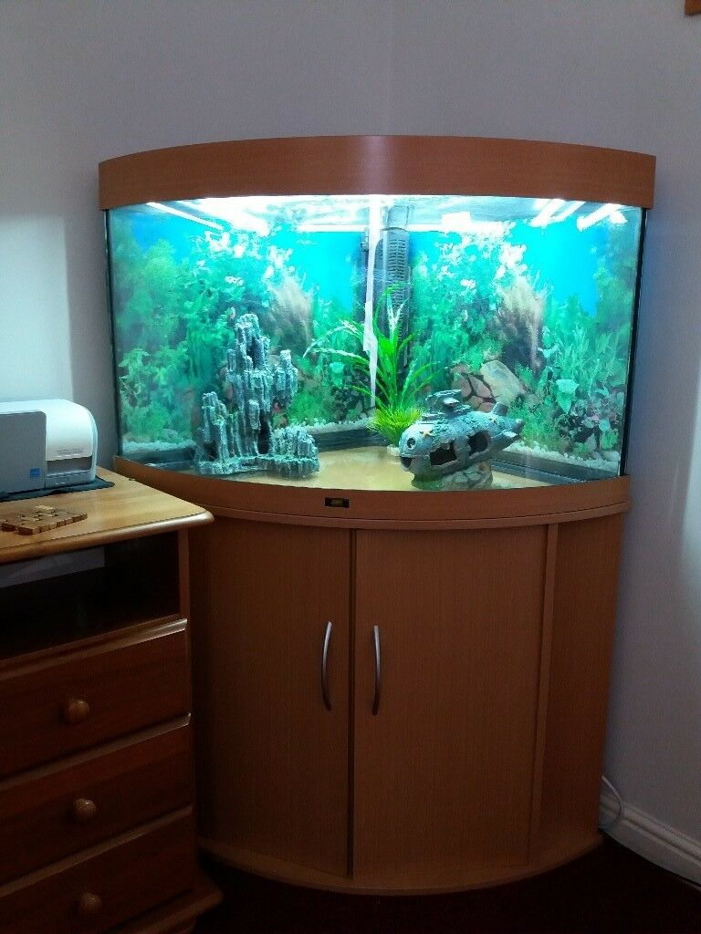 Juwel Trigon 190 Litre Aquarium For Sale In Swindon
