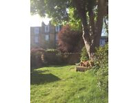 Double room available in 4 bed flatshare