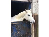 Volunteer required to help out at a stables