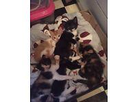 Stunning kittens for sale in Rochester Kent