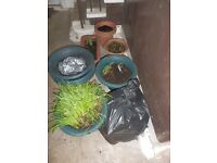 A selection of plastic pots and trays for immediate collection. Only £1 for the lot.