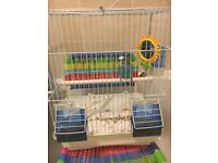 Baby 8 weeks old budgie with cage e.t.c