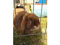 Missing Rabbit S8 area