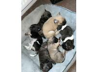 Puppies for sale.
